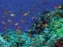 sharm reef.jpg